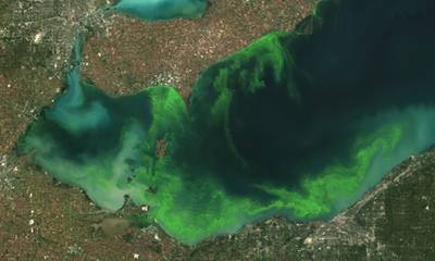 Lake Algal Blooms: Image courtesy of NOAA