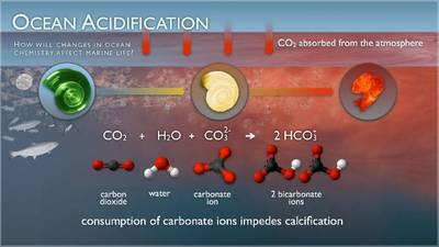 Ocean Acidification Illustration. By NOAA Pacific Marine Environmental Laboratory