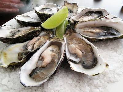 Pacific Oysters: Image Wiki CCL