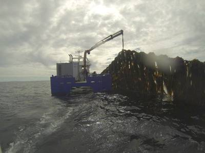 Seaweed harvesting: Photo SES