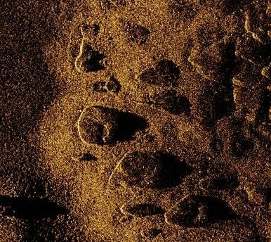 AquaPix acoustic image of boulders in less than five-meter water depth