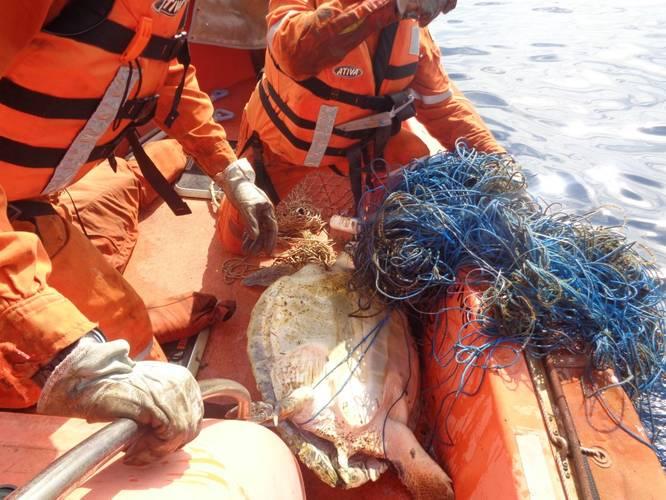 Cidade de Rio das Ostras Rescuers untangling the sea turtle from the net (Photo: Teekay)