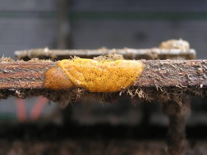 Encrusting biofouling organisms on a metallic surface. Credit: Maria Salta