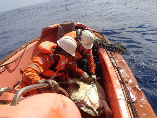 Freeing the sea turtle (Photo: Teekay)
