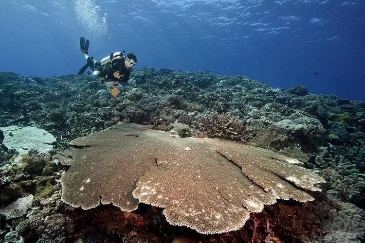 ©Khaled bin Sultan Living Oceans Foundation/Ken Marks