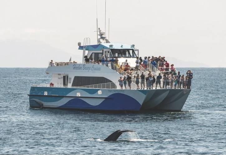 (Photo: Harbor Breeze Cruises)