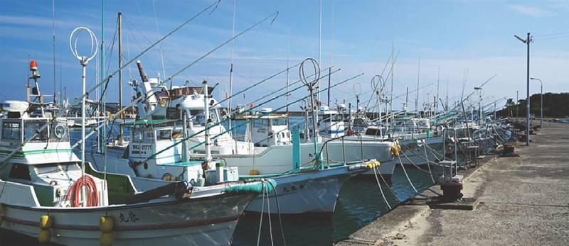 Photo: Wakayama Fishery Cooperative