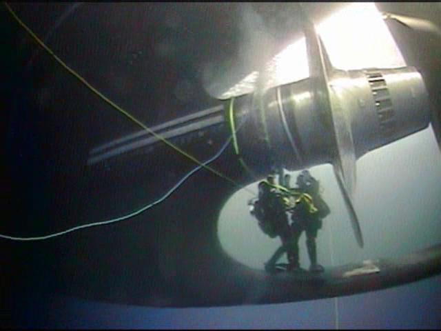 us-coast-guard-scuba-divers-95773.png