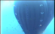 Photo: Unique Seaflex